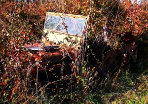 jeep in the weeds