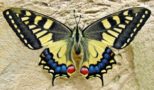 large yellow butterfly copy