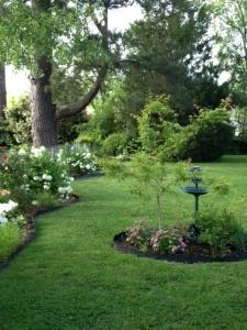 Garden best view of fenceline
