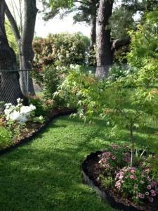 Garden tree and fenceline