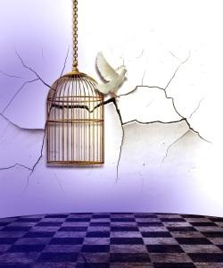 Freed bird