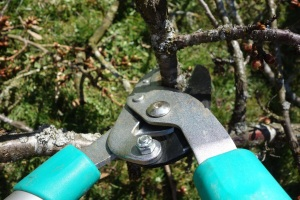 pruning-shears copy