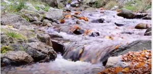 Stream with leaves copy