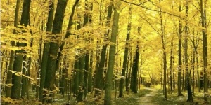 Woodland Path copy