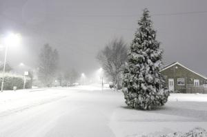 snowstorm pine streetligts