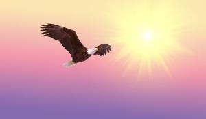 bald-eagle-in flight