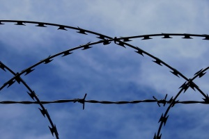 barbed-wire copy