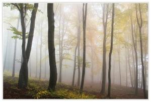 mist in tress