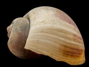 shell copy