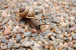 snail crawling on rocks