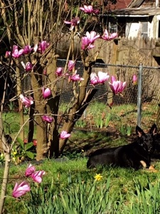 Spring Nessa