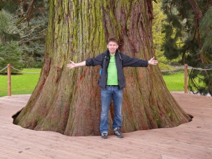 giant-redwood man showing girth copy