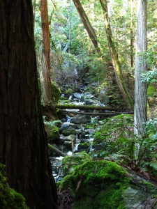 redwoods with stream