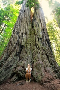 twin sequoia with girl copy
