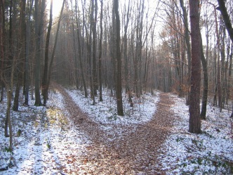 forest-paths in snow copy