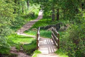 bridge with jag in path copy