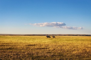 horseback on the prairie