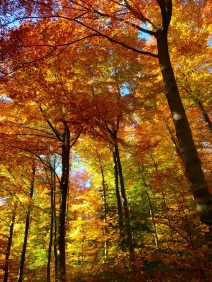 autumn-forest-copy