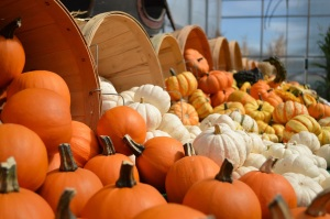 gourds-and-pumpkins-copy