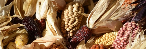 thanksgiving-bounty-banner-copy