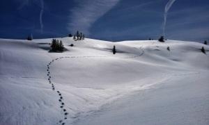 trail-copy